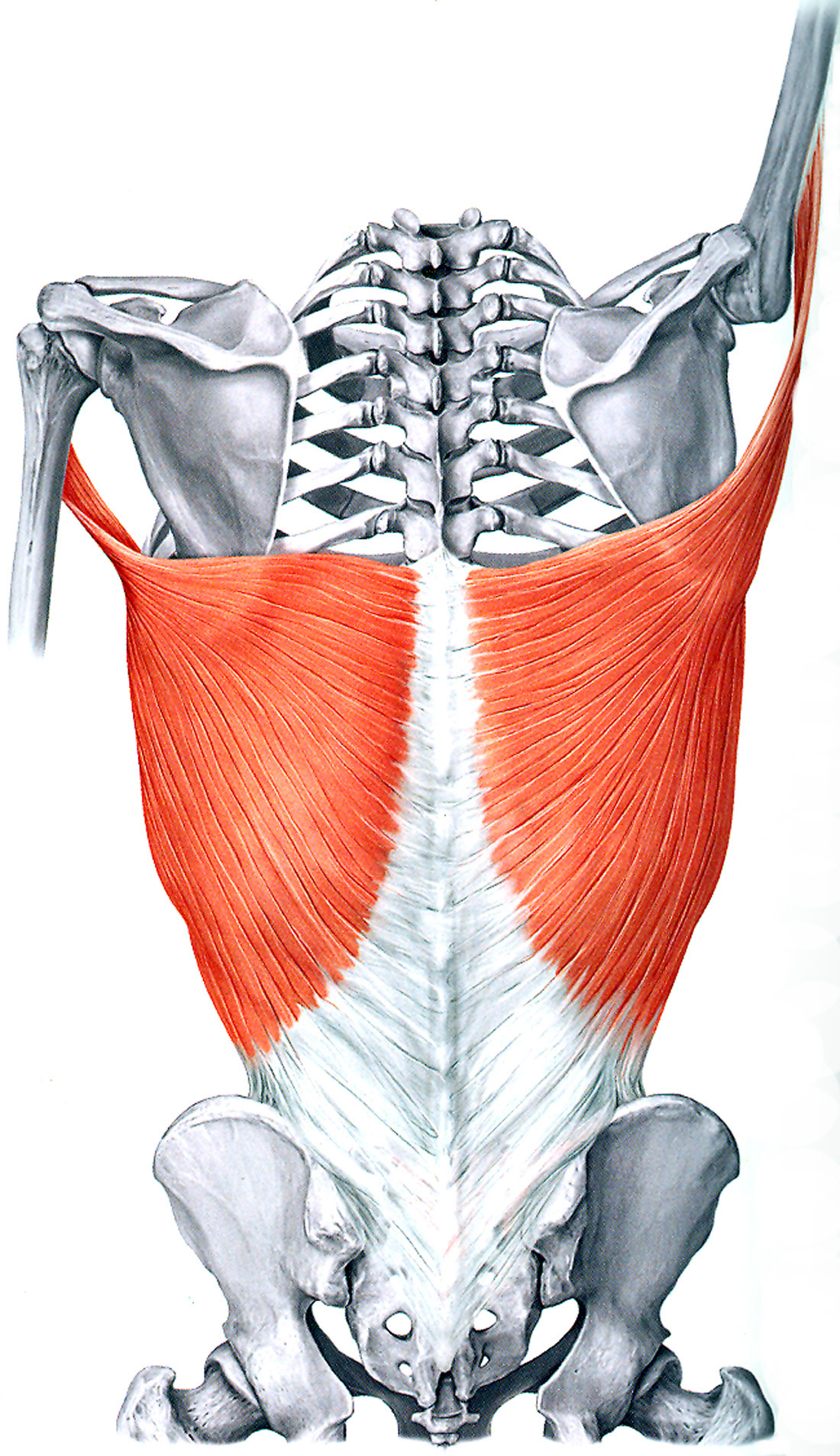 Taking Tension Out of the Bar – Discover How to Fire Your Lats